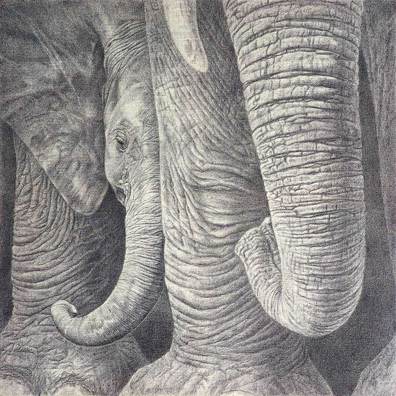 Baby elephant artwork