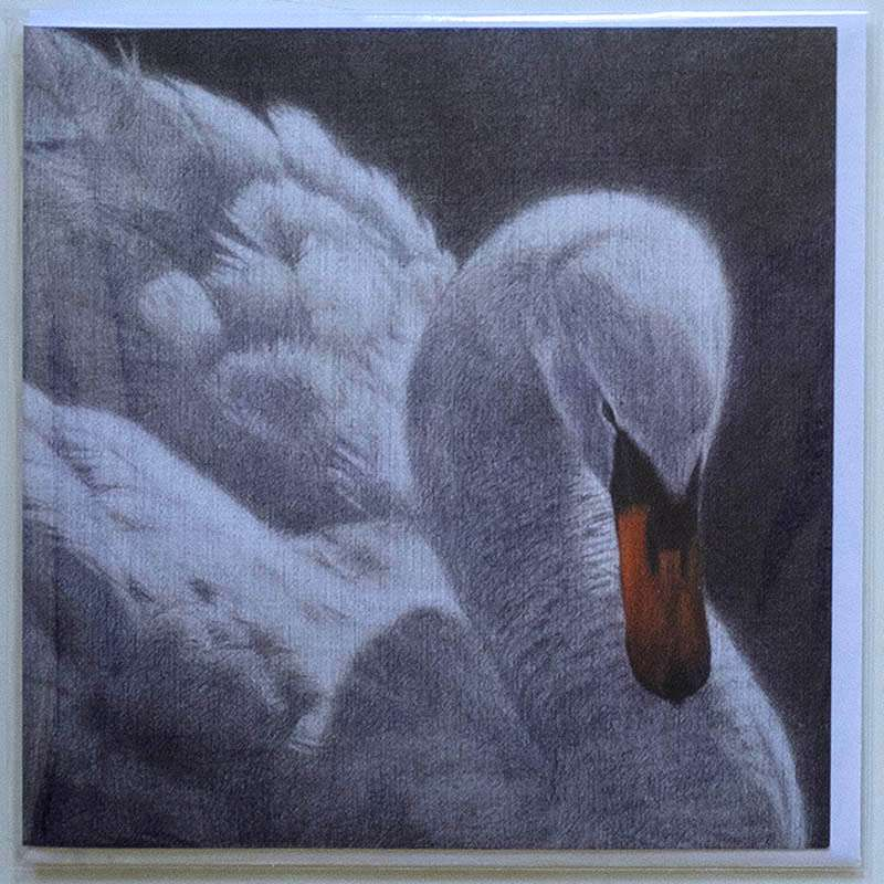 Swan card front