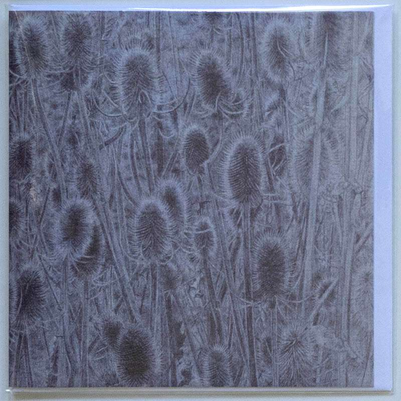 Teasels card front