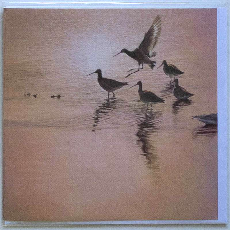 Haven Godwits card front