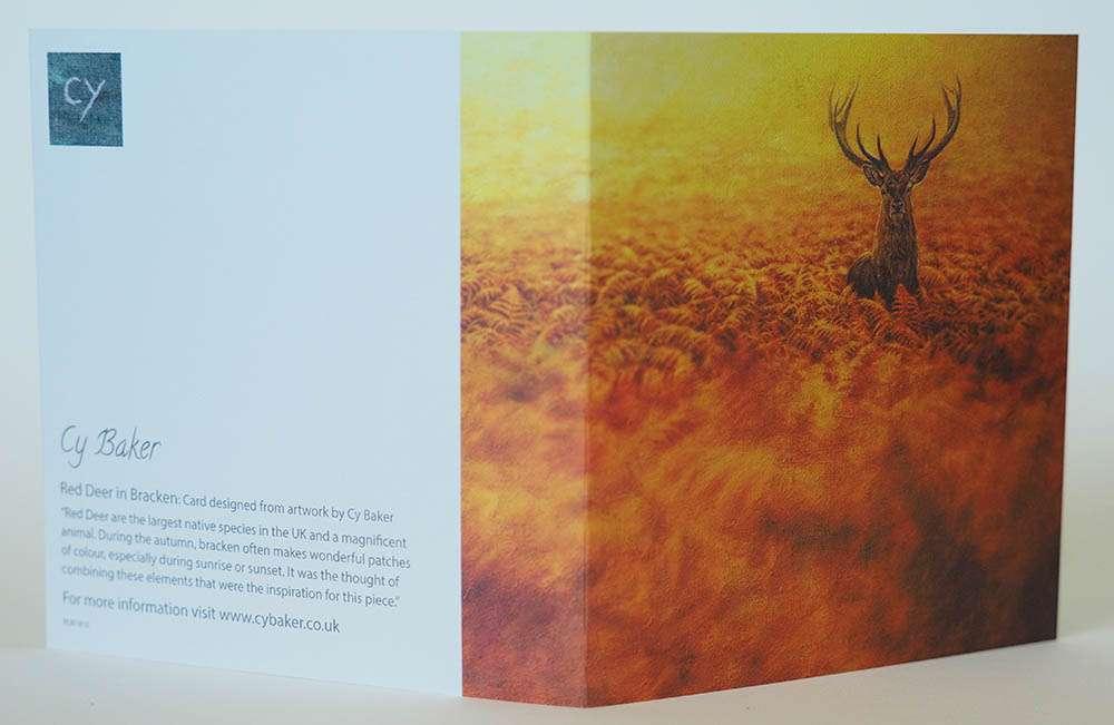 Red Deer in Bracken front and back