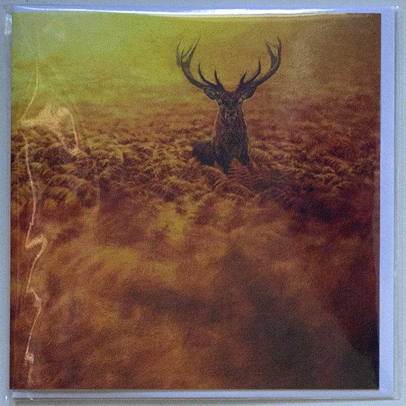 Red Deer in Bracken front