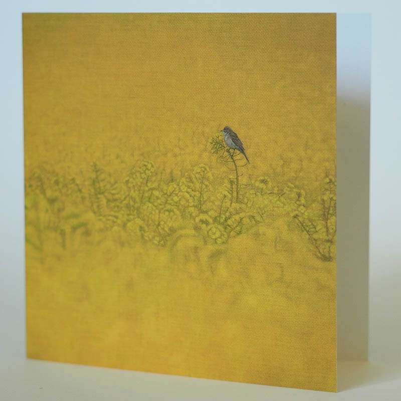 Field of Gold card