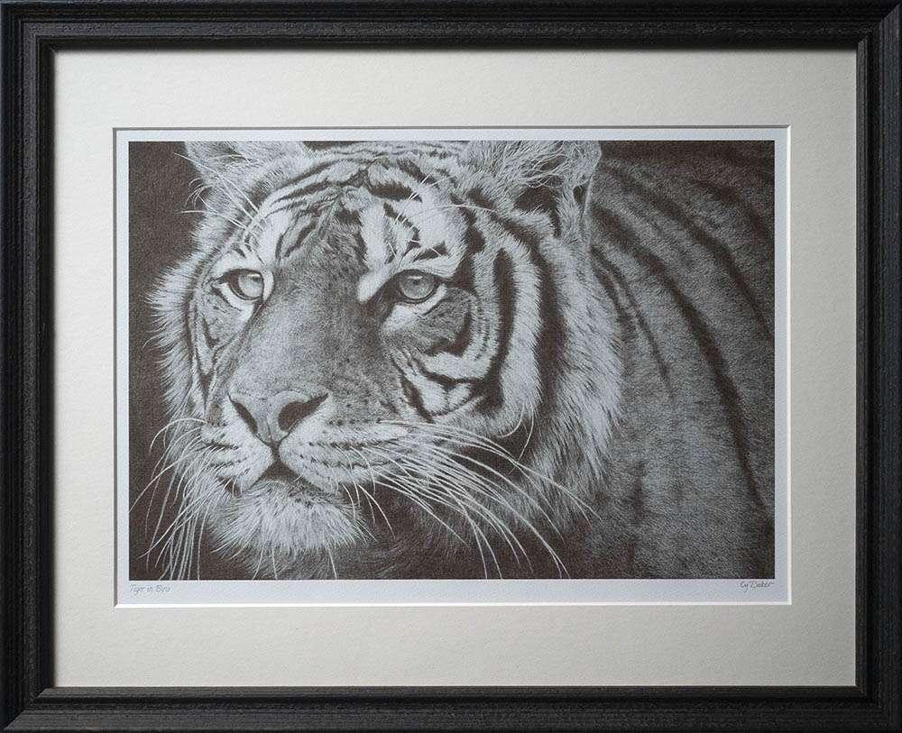 Tiger print in dark frame