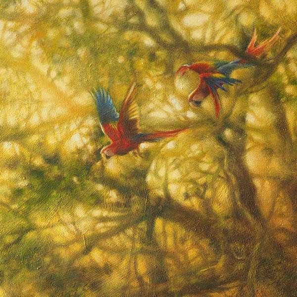 Scarlet Macaws detail