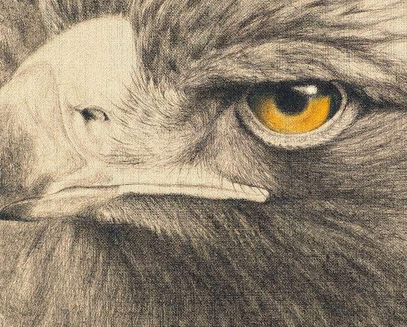 Golden Eagle detail