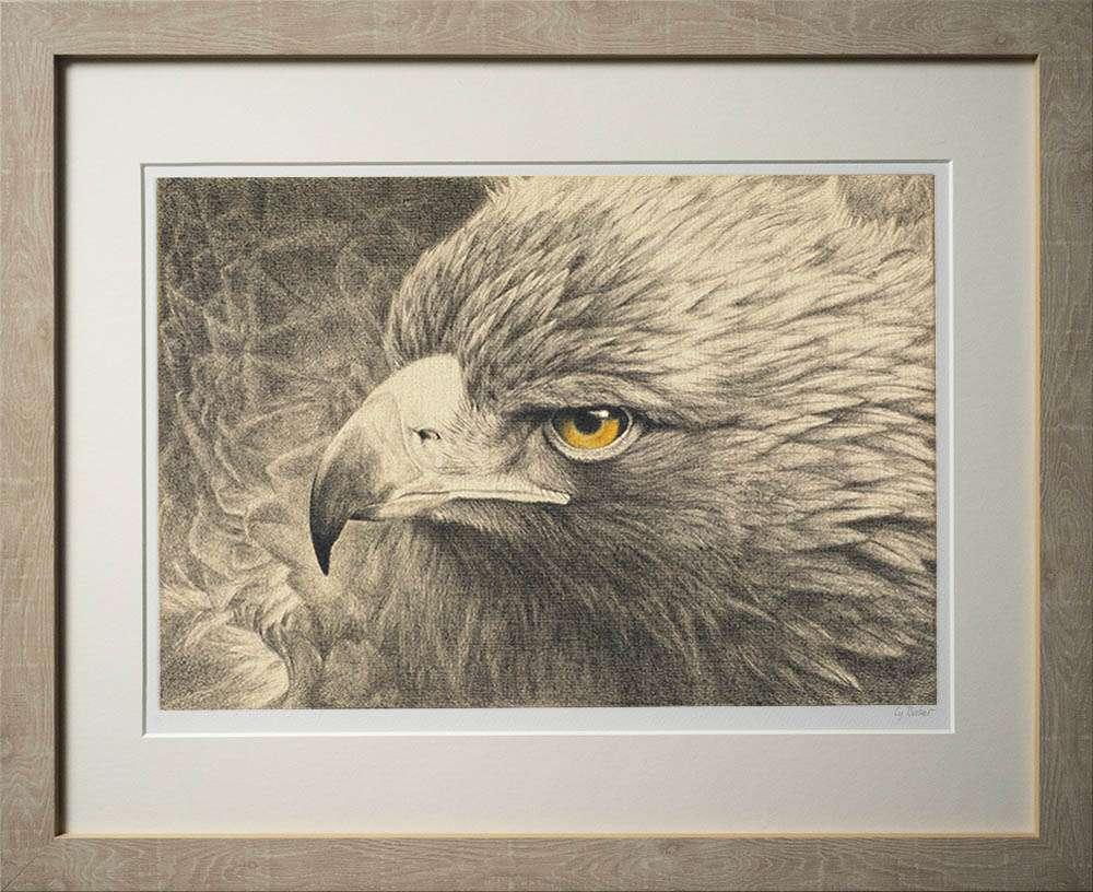 Golden Eagle print in light frame