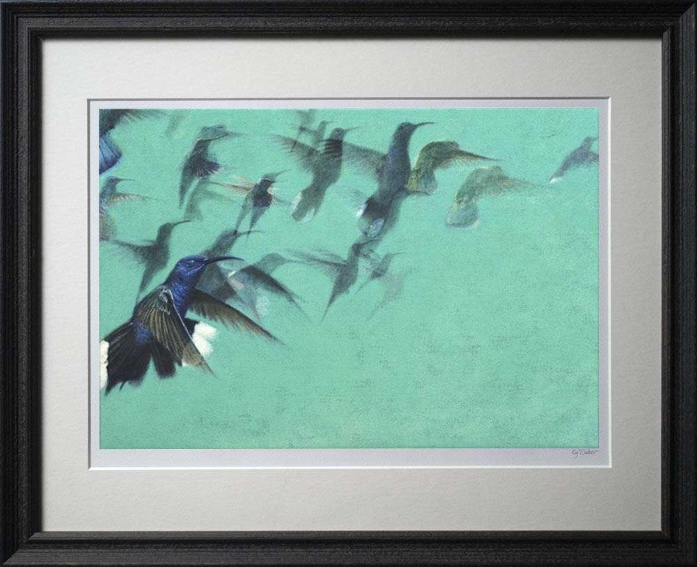 Hummingbirds print in dark frame