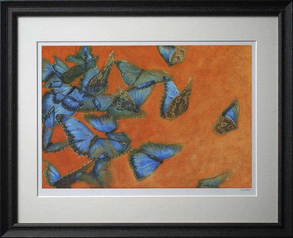 Blue Morpho print in dark frame