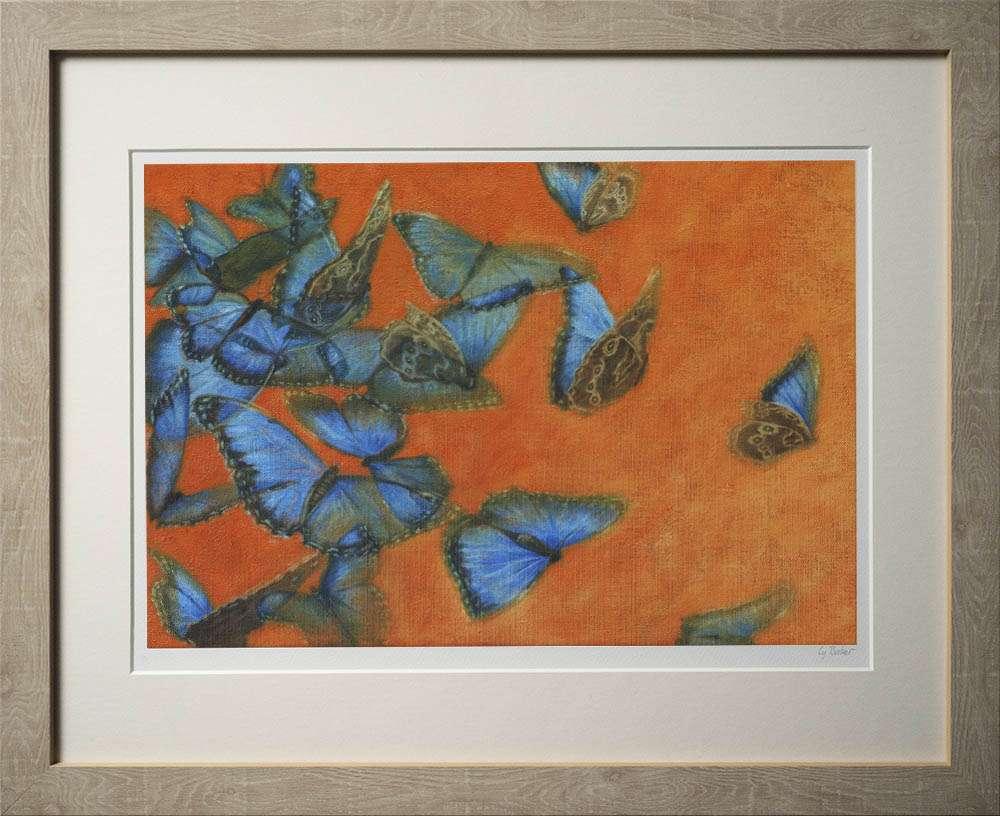 Blue Morpho print in light frame