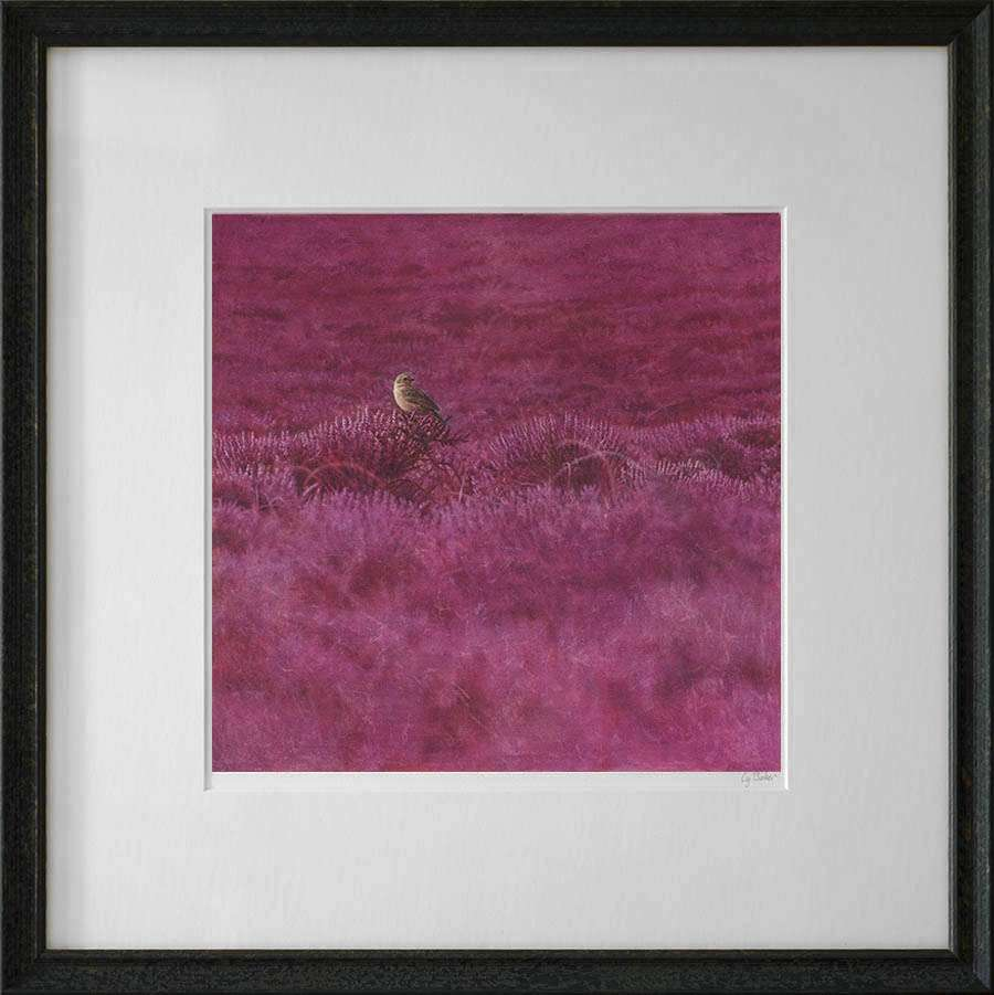 Framed print of Pipet in Heather
