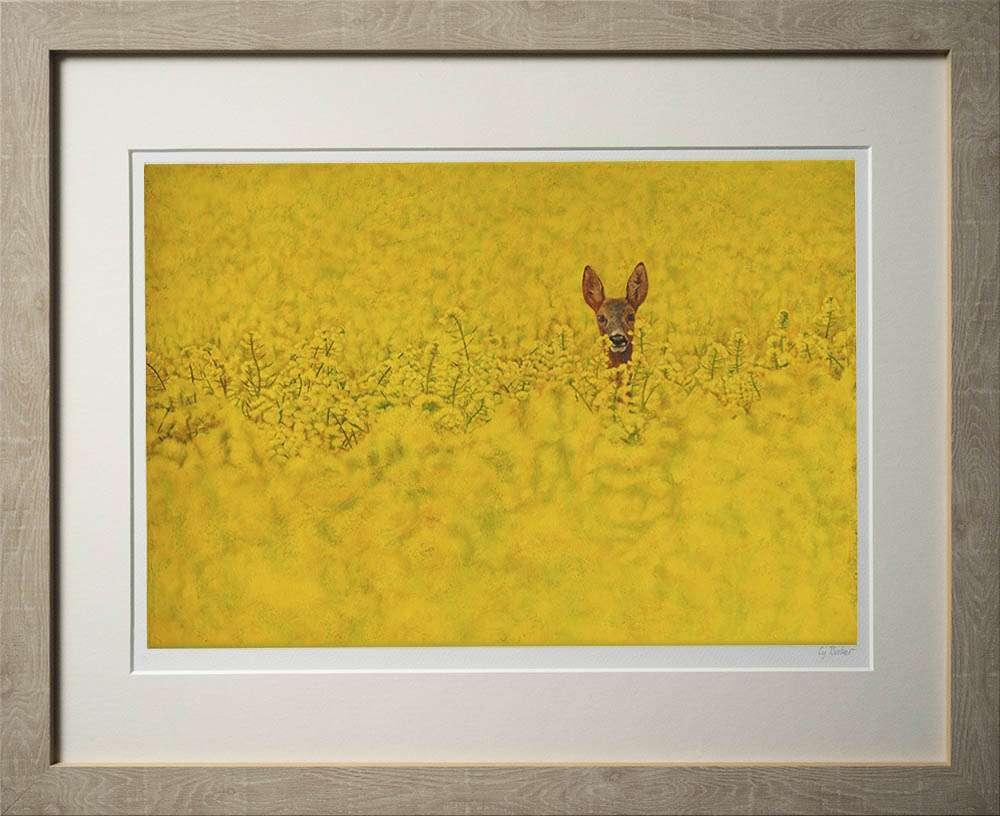 Roe deer in rapeseed print in light frame
