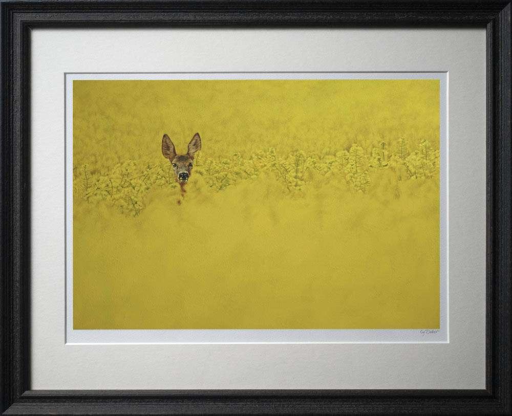 Roe deer in rapeseed print in dark frame