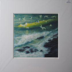 Coastal Gulls