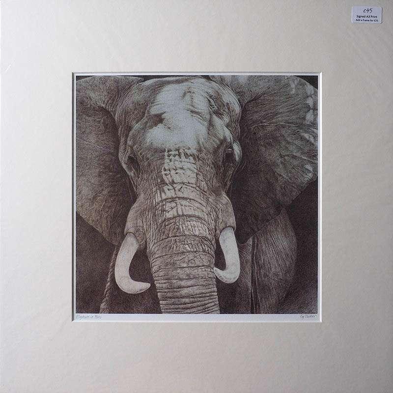 Unframed print of the elephant