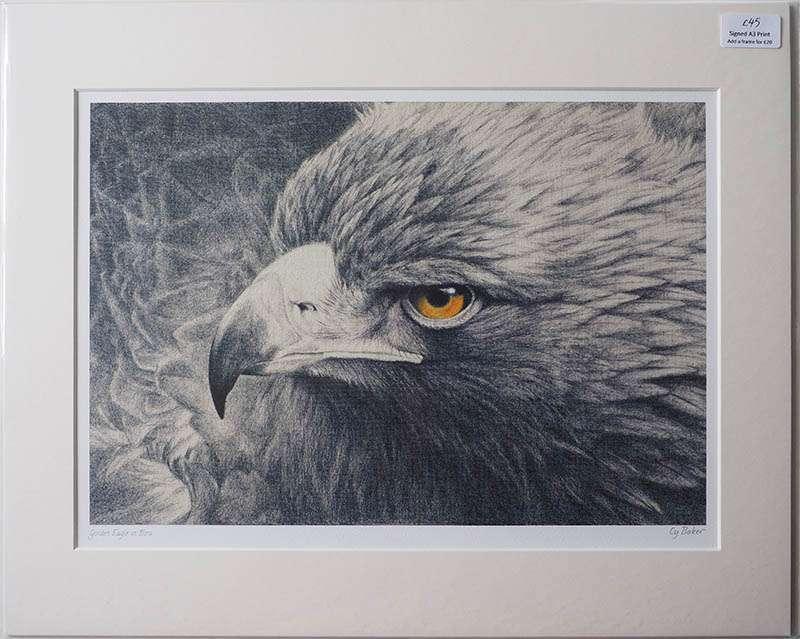 Unframed print of he golden eagle