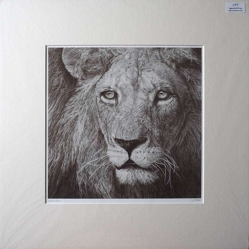 Unframed print of the lion