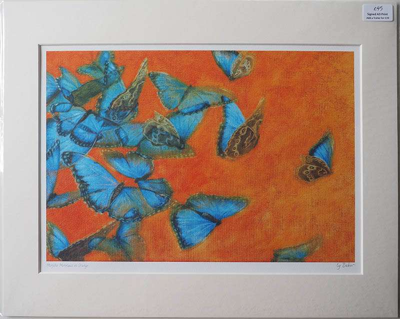 Unframed print of Blue Morpho
