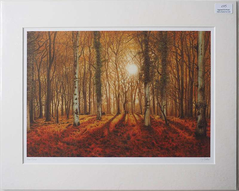 Print of New Forest Morning
