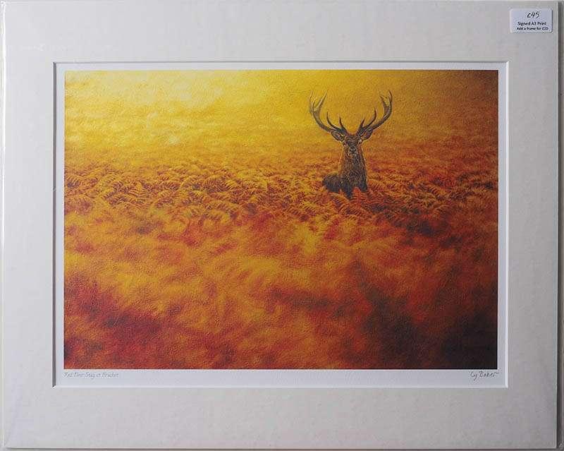 Unframed print of Red Deer in Bracken