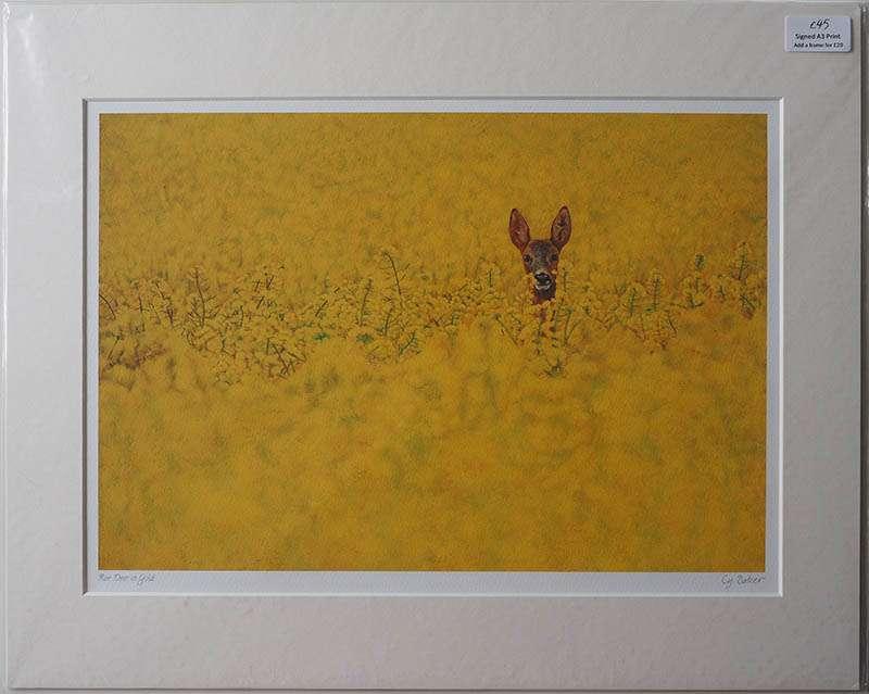 Unframed print of Roe Deer in Bracken
