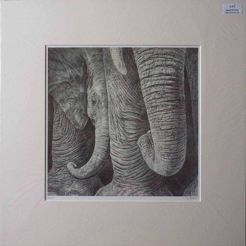 Print of a baby elephant