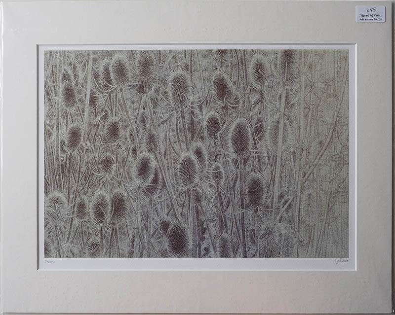 Unframed print of the teasels
