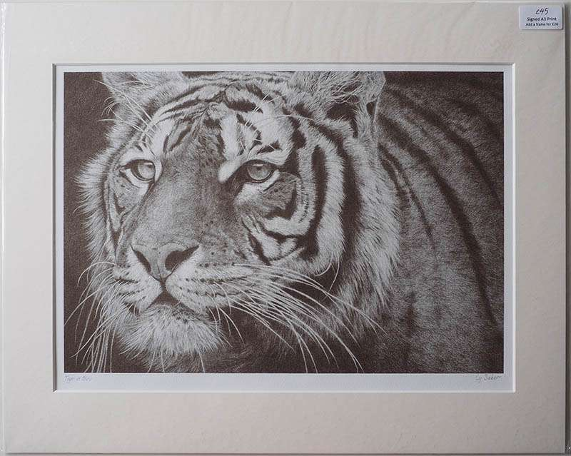 Unframed print of the Tiger