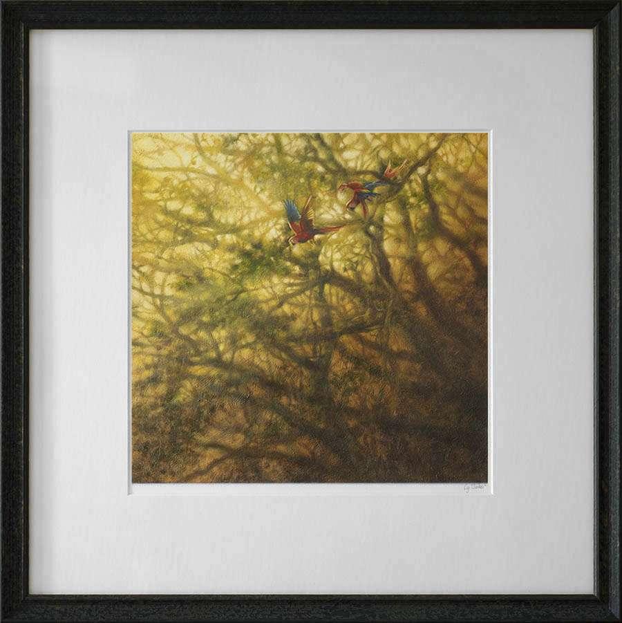 Framed Macaws print dark