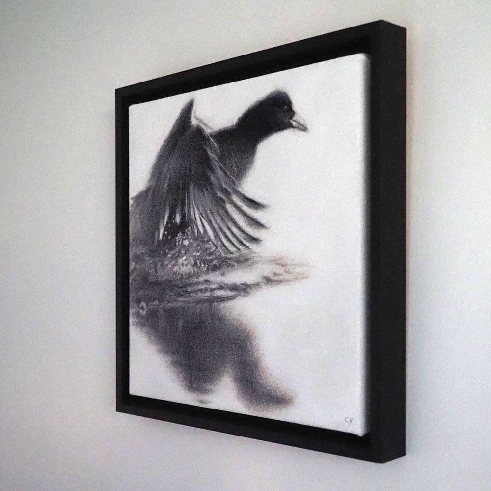 Original framed Coot at an angle