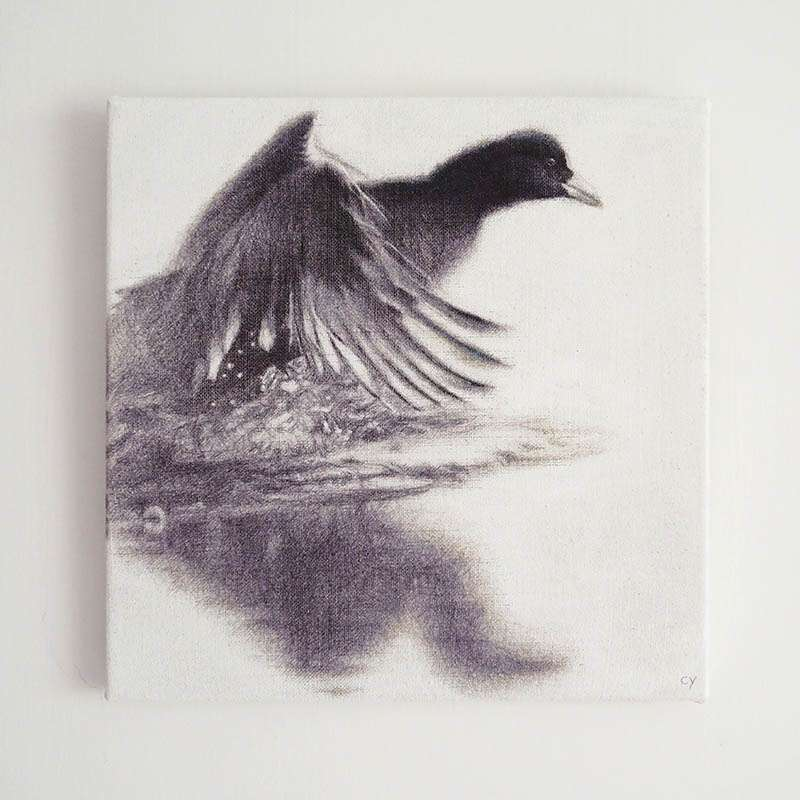 Original unframed Coot wall art