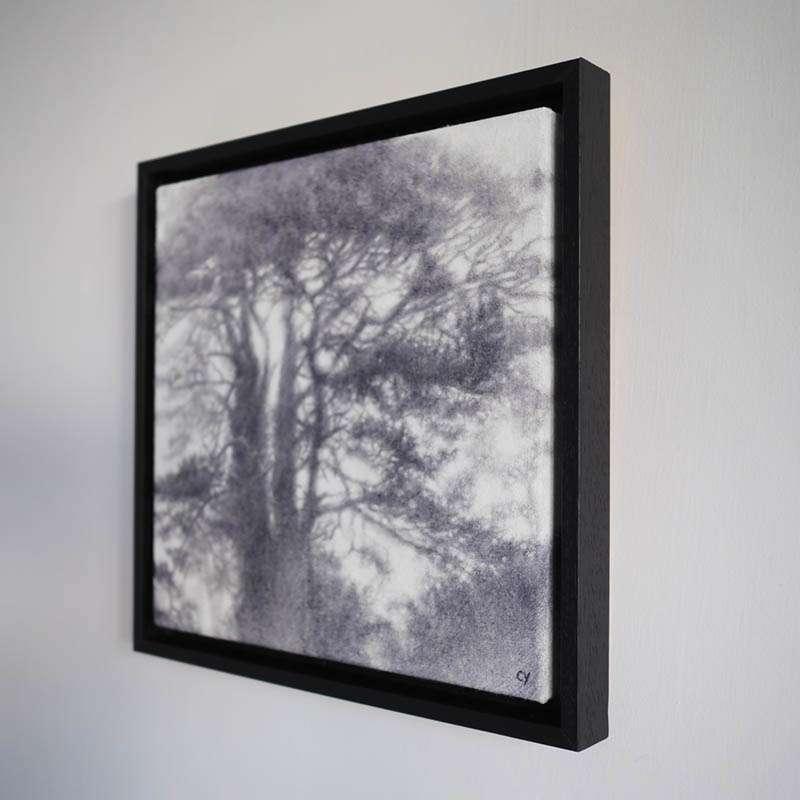 Original framed Scots Pine at an angle